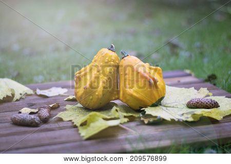 Decorative pumpkins on a wooden background. Autumn day