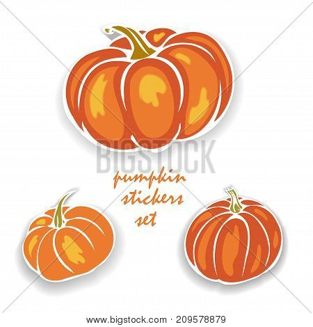 autumn pumpkin, organic stickers set vector illustration