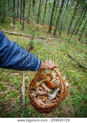 Wicker baskets full of various kinds of mushrooms in man hands in a forest.