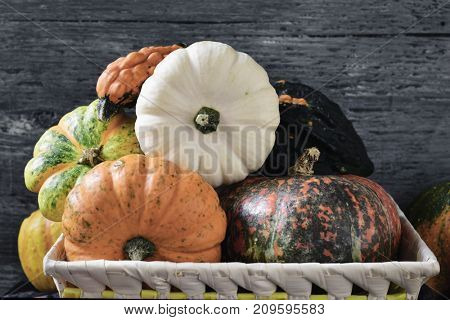 closeup of a basket with an assortment of different pumpkins against a gray rustic wooden background