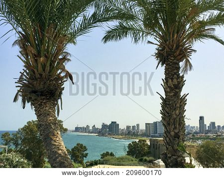 In the background between the two palms is the Israeli city of Tel Aviv to see with its beaches and the skyline