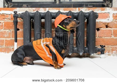 funny dog builder dachshund in an orange construction helmet and a vest against a black iron battery