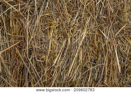 Yellow dry hay closeup as horozontal background