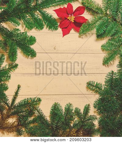 Wooden background and fir  with a free space for text or product demonstration