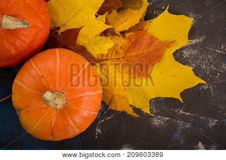 Pumpkin and fall colorful leaves on dark background