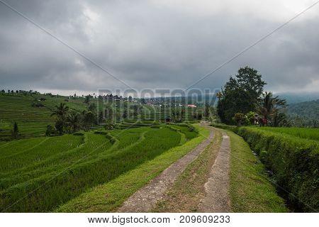 Rice terraces in Tegallalang. Ubud. Bali Indonesia