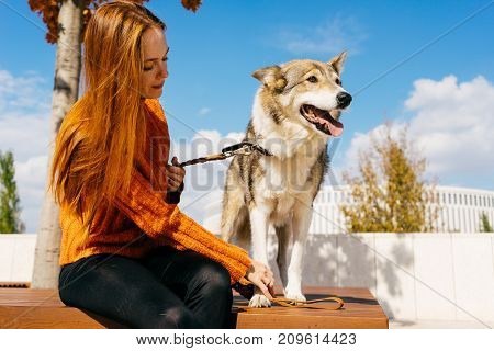 beautiful young red-haired girl walking in the park with her big dog sitting on a wooden bench