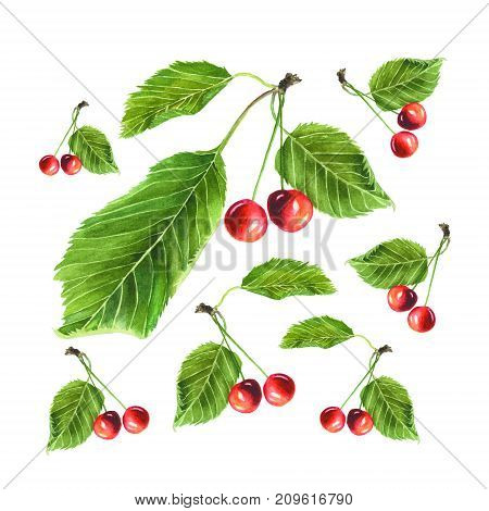 Botanical watercolor illustration of red cherries with green leaves isolated on white background.
