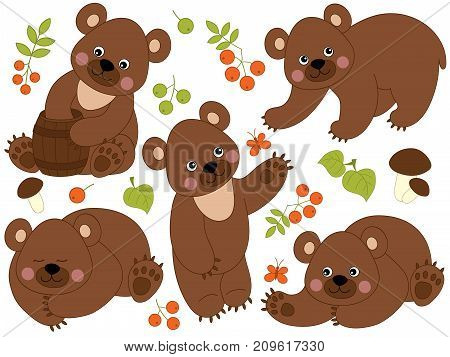 Vector set of cute cartoon forest brown bears, leaves, berries and mushrooms. Vector brown bear. Forest brown bears vector illustration