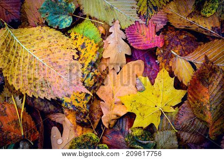 nice autumn cover with leafage - abstract background