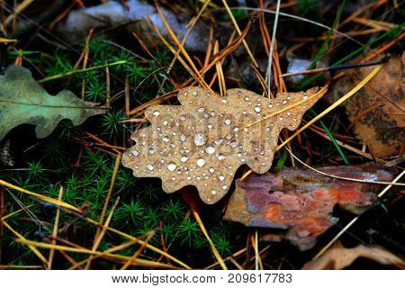 autumn leafs with water drops - abstract background