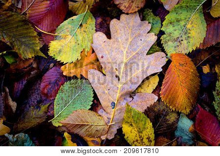 nice abstract autumn leafs background