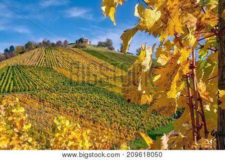Stuttgart Germany Grabkapelle Vineyards Autumn Fall Season Beautiful Landscape Farming Agriculture W