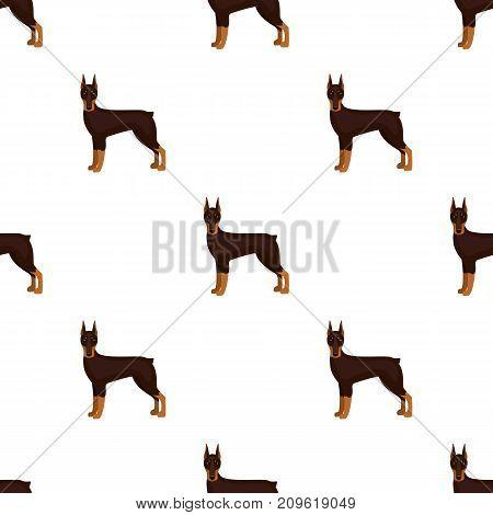 Doberman, single icon in cartoon style.Doberman, vector symbol stock illustration .
