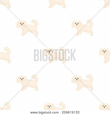 Spaniel, single icon in cartoon style.Spaniel vector symbol stock illustration .