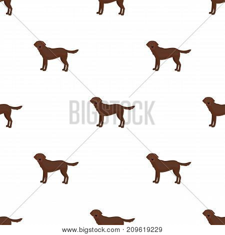 Mastiff, single icon in cartoon style.Mastiff, vector symbol stock illustration .