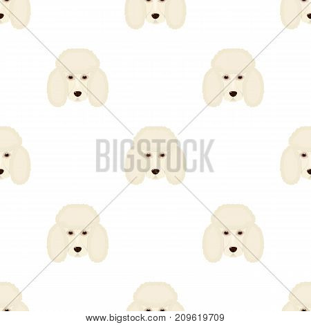 The dog breed is poodle.Muzzle of the poodle single icon in cartoon style vector symbol stock illustration .