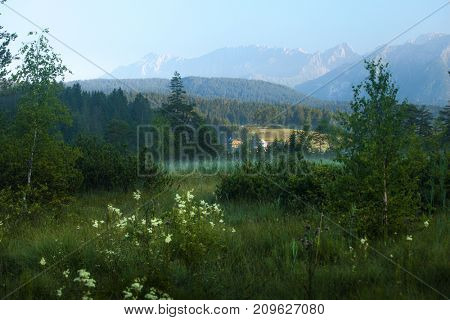 Green hills with pine trees and Alps on the horizon. Germany