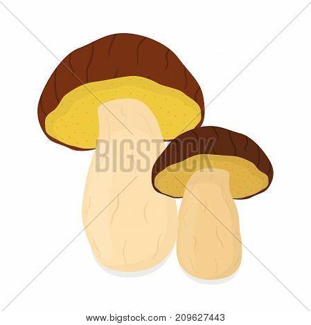 Edible mushrooms, bolete mushroom. Raw vegetarian food. Made in cartoon flat style. Vector illustration