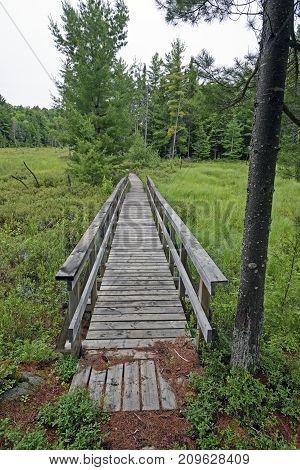 Boardwalk through a Forest Bog in Killarney Provincial Park in Ontario Canada