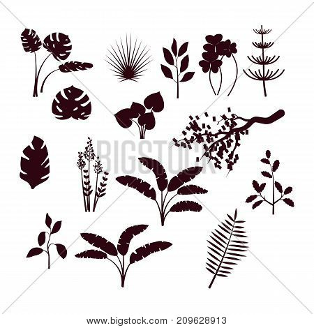 Forest bush and grass set. Nature plants, jungle and greenwood black vector silhouettes isolated on white background.
