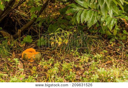Jack-o-lantern Under A Small Tree