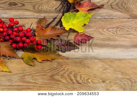 Thanksgiving Wreath With Leaves And Rowan Berries On Wooden Background