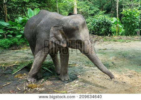 Little elephant in the jungle in Thailand