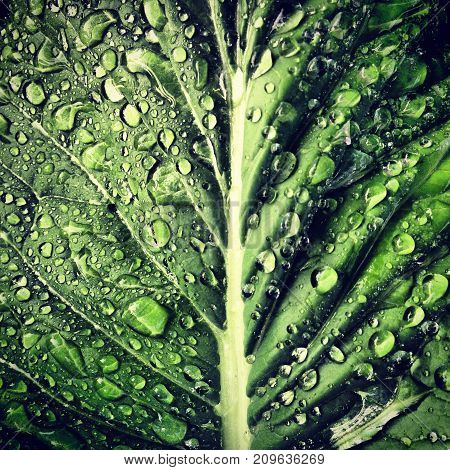 a close up macro of a plant leaf with rain drops.