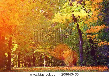 Autumnal natural background. Colorful leaves everywhere in morning sunlight.