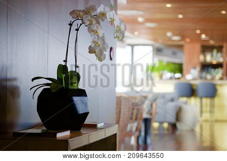 Modern decor with orchid in a vase