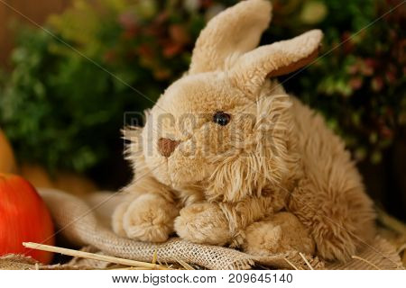 Furry brown toy rabbit on the wodden background