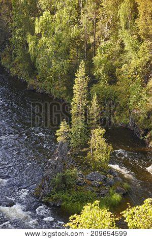 Finland forest at sunset. Pieni karhunkierros trail. Nature background. Vertical