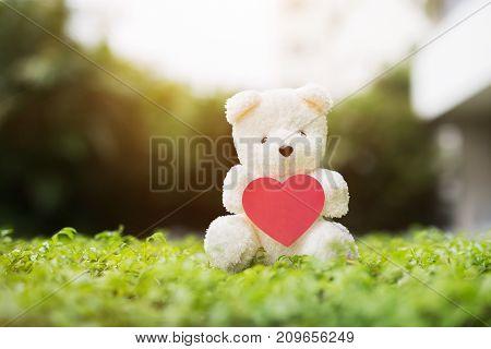 Teddy Bear doll nature / gift shop