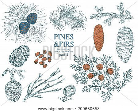 Sketch firs elements collection with pine cupressus cedar spruce redwood branches twigs and cones isolated vector illustration