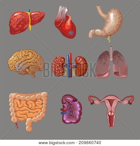 Cartoon internal human organs collection with sick body parts on gray background isolated vector illustration