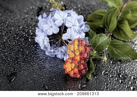 Flowers with water drops on dark colorful background