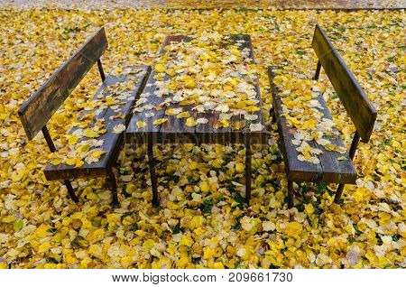 Two benches and a table in the park. The entire space is covered with yellow autumn leaves.
