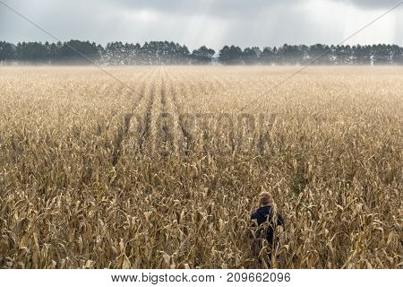 a man standing alone in a field of corn. It is a magical moment where the fog cleared and a few rays of sunlight paved the way through the clouds.