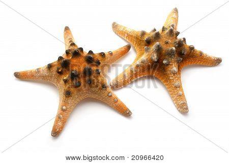 Two Seastars