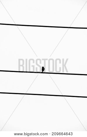 Silhouette of a small bird similar to a sparrow on black wires on a white background