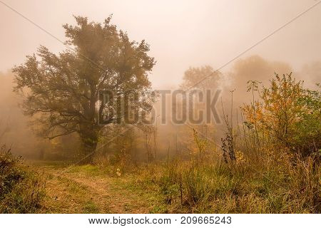 Fantasy landscape of the mysterious foggy autumn forest and lonesome tree in front