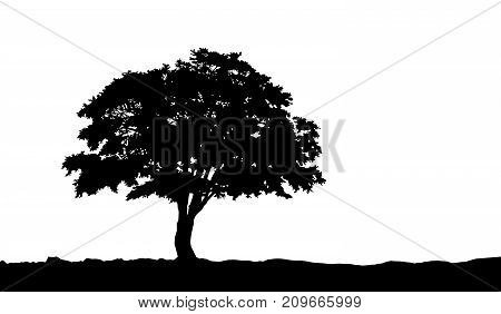 tree on the hill silhouette on an isolated background.  illustration .