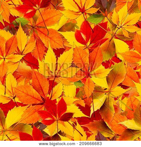 Fall autumn leaves seamless background - texture pattern for continuous replicate.