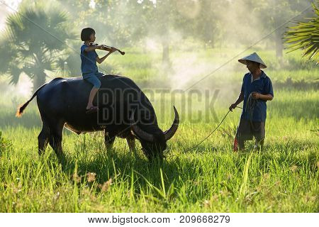 Thai peasant family a girl with father and buffalo in rice field.