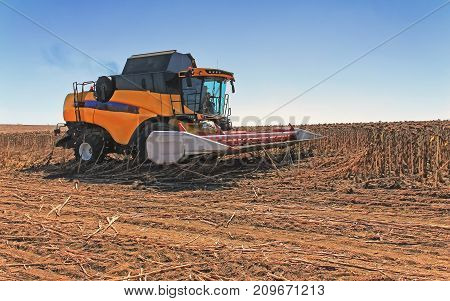 Combine Harvester In Action On The Wheat Field. The Process Of Collecting Ripe Crops