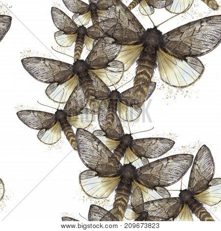 Watercolor drawing seamless background of shaggy butterfly moths, night butterfly, brown color, wings light with spots on white background for decor, prints