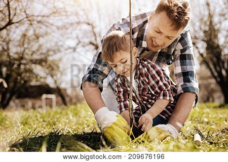 Be one team. Attentive child expressing positivity and bowing head while planting young sapling
