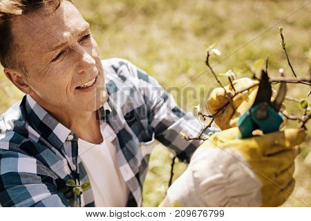 Professional gardener. Attractive man keeping smile on his face and using garden shears while preparing trees