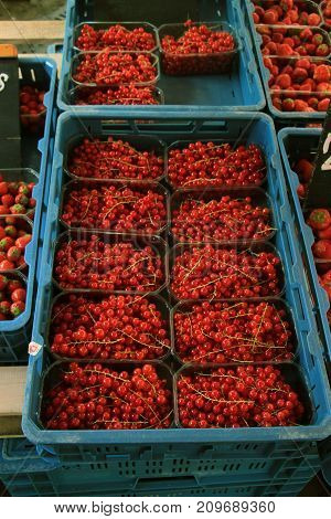 red currants in small boxes on a market stall